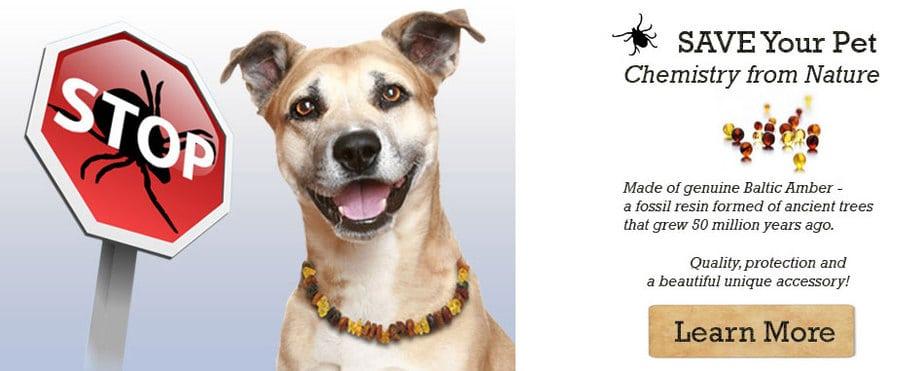 Ambertick Dog and Cat collar